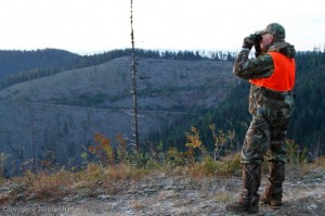 Classing the clearcut
