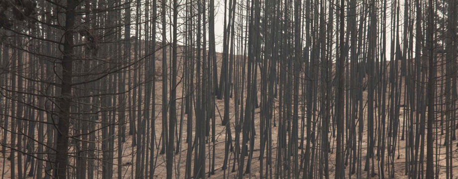 Scorched trees are pictured after being burned by the Carlton Complex Fire near Malott, Washington